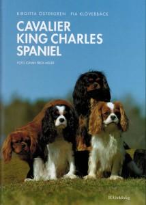 Bok Cavaliler King Charles Spaniel