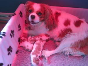 Stella och valparna nyfödda