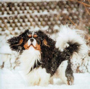 Underbart med snö