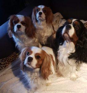 Stella, Charlie,, Stacy och Lisa
