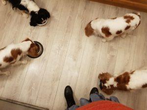Charlie, Lisa, Stella och Stacy äter