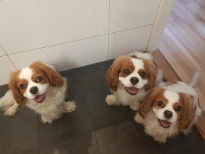 3 som har badat