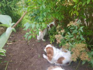 Skönt ligga i skuggan när matte jobbar i trädgården