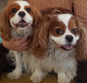 Stella och Yogi
